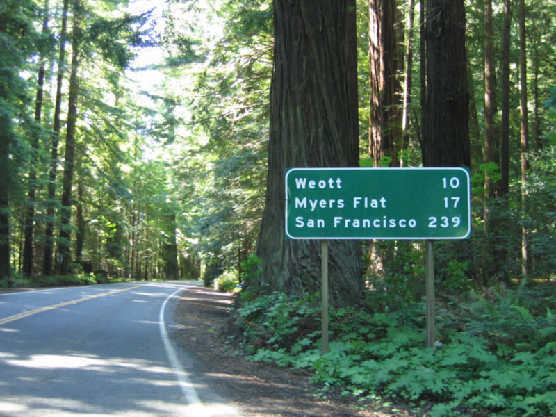 Tour The Avenue Of The Giants